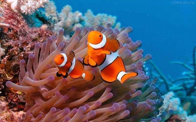 Động vật biển