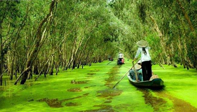 Khu sinh thái rừng Tràm An Giang – Địa điểm du lịch độc đáo