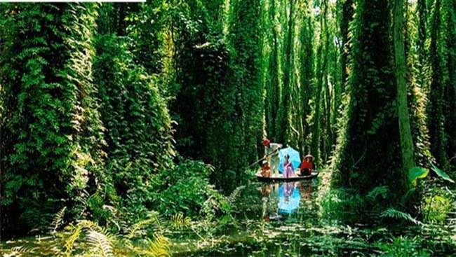 Khu sinh thái rừng U Minh Nhượng – địa điểm du lịch độc đáo