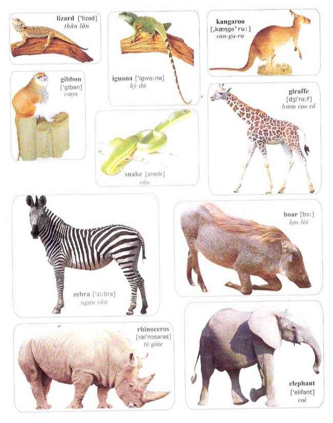 Từ vựng về các loài động vật hoang dã