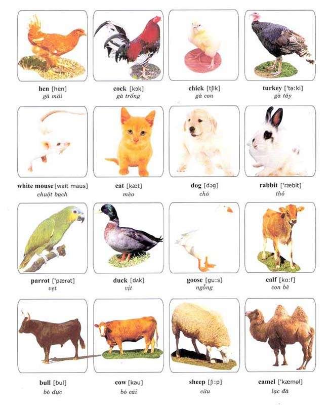 Từ vựng về các loại vật nuôi